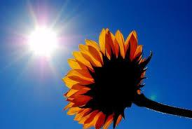 sun shine