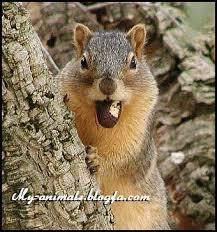 سنجاب لرستان محیط زیست شعر لری