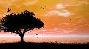 http://t3.gstatic.com/images?q=tbn:-ltLKJ0LtH-ZBM::www.handytwitter.com/uploads/2009/06/evening_handytwitter.com.jpg&t=1&h=166&w=303&usg=__8Pswh-SIP1mpHky183ULPRBH1Gs=