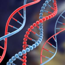 DNA strand, part of the building blocks of life