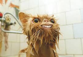 http://t3.gstatic.com/images?q=tbn:2akPkyvZdnKKkM:http://web.aanet.com.au/vmerchant/weird-cat.jpg