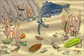 A typical Cambrian