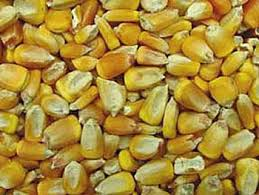 corn cob blast media, corn cob blast grit, corn cob grit, corn cob abrasive, corn cob flour, corn cob abrasive media, corn cob pieces, corn cob dust, corn cob granules, corn cob pc, 