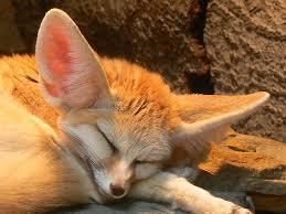 إليكم صور الحيوان الدي تشتهر به الجزائر وهو رمز لها CQhi4af4911920fe0