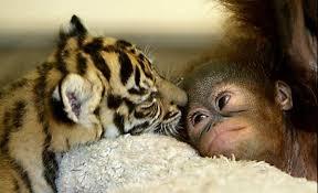 Amor de madre Amigosya2