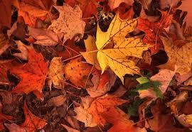یزش برگان پاییزی