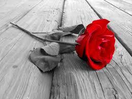 شاخه گل تک و تنها عشق