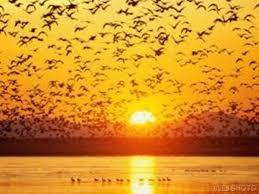 پرواز پرندگان دریایی در غروب