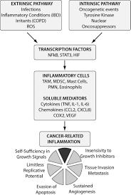 molecular pathways in cancer related inflammation biochemia medica