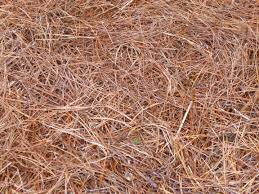 home depot black friday spring 2017 bark dust garden of aaron six reasons why pine straw makes the best mulch