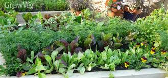 Planning A Raised Bed Vegetable Garden by How To Build Raised Beds For Your Vegetable Garden