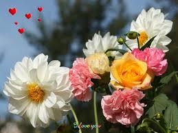 வால்பேப்பர்கள் ( flowers wallpapers ) 01 - Page 4 Images?q=tbn:ANd9GcQ0YdtB1P1Qsp0BRrRr6OmqHniA5Fj_lHXsnGVz2CtC8Qv1iPWF