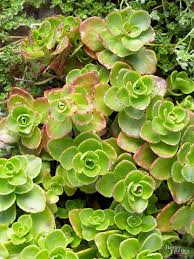 best 25 winter garden ideas on pinterest fall planting