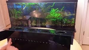 indoor aquaponics system how to grow vegetables in your aquarium
