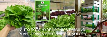 singapore hydroponics online store home farming indoor