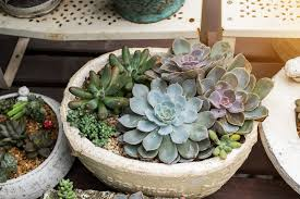 Succulents Pots For Sale by Best Garden Store Options In Nyc For Plants Flowers U0026 Landscaping