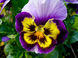 Las flores que nos gustan. Images?q=tbn:ANd9GcQ1soRSX_37Y71-6zIClbBOQN1kFinpp66KM0rDabJ-oK3YIVQ&t=1&usg=__02ZeHvdQ38yJq0_iULFw6yc_-0E=