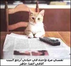 حبايبي القطط Images?q=tbn:ANd9GcQ25651PJqIR68ah2GdIDdhSoXsea2x2kGUionUbtHkjGEEkI1JFQ