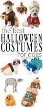 best halloween costume shops best 25 halloween costumes for dogs ideas only on pinterest pet
