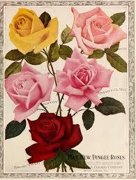 remodelaholic 25 free printable vintage floral images