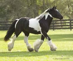 Udomi jednog od konja! - Page 6 Images?q=tbn:ANd9GcQ38PV7h5H5D4Jlqp5qUgCjKvKK24nBQFUfU67mhcQrTnx78IJi