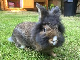 i think my bunny needs a haircut http ift tt 2pnxkwp
