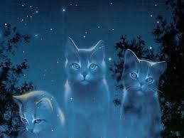 Gatti tra le stelle