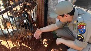 Cães abandonados em residência são resgatados em Londrina (PR ...