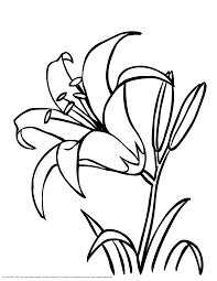 lily flowers colouring pages art for crafts pinterest lilies