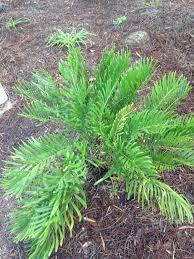 16 best florida landscaping ideas images on pinterest florida