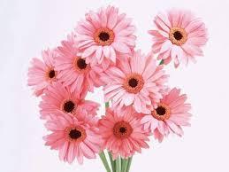بمناسبة عيد المرأة العالمي 8 مارس Images?q=tbn:ANd9GcQ57IlaZFleRkeBuH6mYF1m0WPyHLkg73v82Z0luQjSlGcllfMv