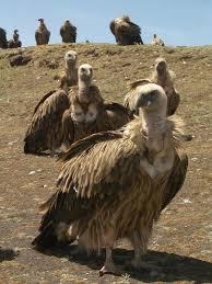 Burkina Faso jails Nigerian woman over vulture voodoo 1