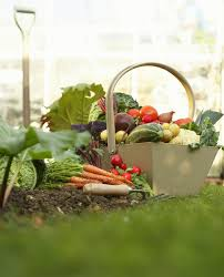 planting a vegetable garden for beginners how when and where