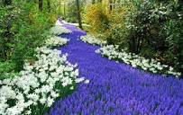 فصل الربيع Images?q=tbn:ANd9GcQ6BWWPO4yzRyGC23pnvVVRswrnzWoRhb5FI16nyrs_VNbJm4iXTp7Hxbchww
