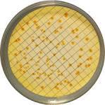 Milieux de culture - Isolement sélectif - Escherichia coli et ...