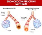 <b>Bronchoconstriction</b>