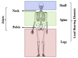 Structure Of Human Anatomy The Anatomy Of A Human Body A Model To Design Smart High Building