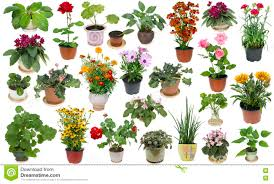 houseplants and indoor flowers set stock photo image 70980728