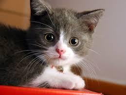 images?qtbnANd9GcQ73TvXE56UaTqm3TD 3gWyWZIfsc0cqycUZSsQ9Wa 6qlRLMSc&ampt1 - Cats