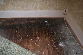 Hardwood Floor Restore Ohw U2022 View Topic Wood Floor Issues