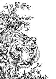 chicago wolves coloring species animal coloring pages
