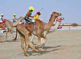 Traditional Sports in Abu Dhabi – For a luxury holiday!