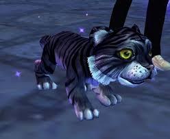 чёрный тигрёнок
