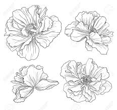 25 poppy drawing ideas watercolor poppies