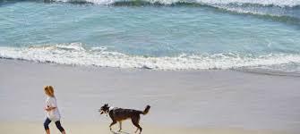 huntington dog beach huntington beach ca beaches surf city usa
