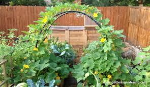 small vegetable garden layout plans the garden inspirations