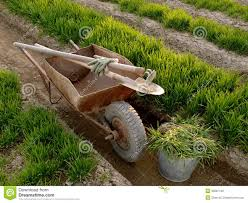 Manure For Vegetable Garden by Wheelbarrow With Tools In A Spring Garden Stock Photo Image