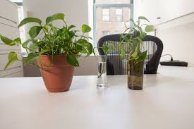 make a copy of this common office plant popular science