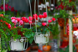 Trang trí hoa tươi ngày tết cho nhà bạn