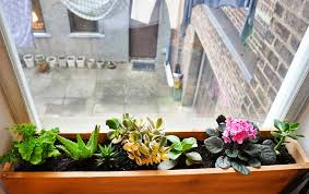 indoor window box and why you should not worry about using it